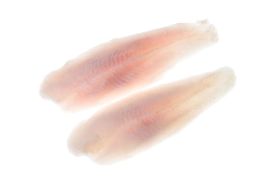Filet Soma Pangasius